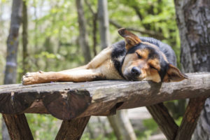 Voorkom je artrose bij je hond?